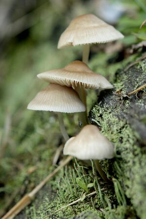 differential focus: Mushrooms growing vertically on a log with differential focus
