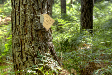 carelessness: Tree with for sale tag tied around the trunk symbolizing carelessness towards trees