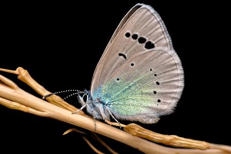 Butterflys community   - Stock Image