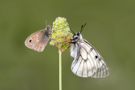 Butterflys community   - Stock Image