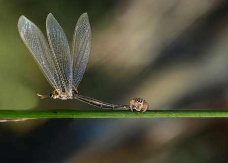 Close up hunter spider - Stock Image