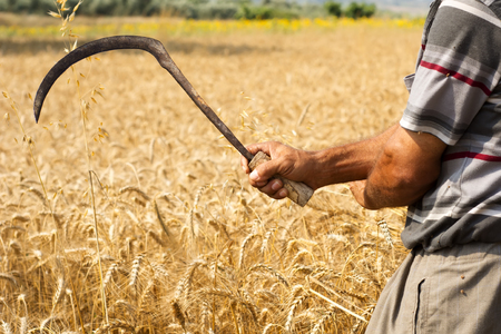 Farmer posing in cultivated wheat field Stock Photo