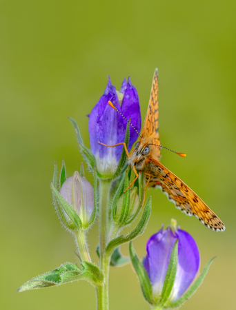 Closeup of beautiful butterfly sitting on flower