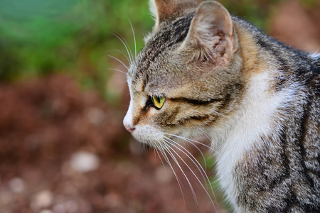 Gray cat portrait