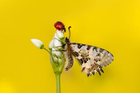 Closeup beautiful butterfly & flower in the garden. Stok Fotoğraf