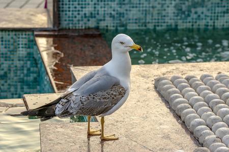 Single seagull close-up stock image Imagens