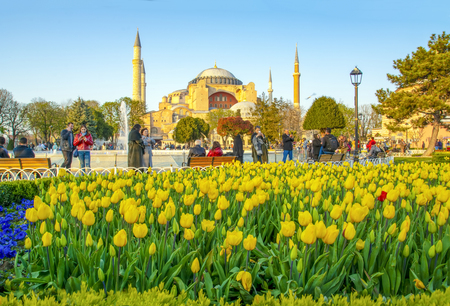 Hagia Sophia is seen behind tulips and fountain at the Sultan ahmet Square in Istanbul, Turkey Stok Fotoğraf - 132419283