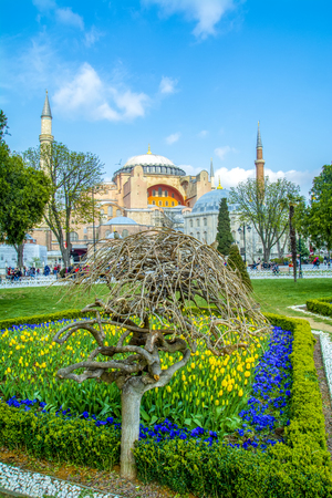 Hagia Sophia is seen behind tulips and fountain at the Sultan ahmet Square in Istanbul, Turkey Editöryel
