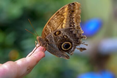 Stock Image butterfly at your fingertips Banco de Imagens