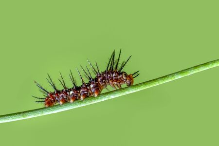 Sign In Beautiful Caterpillar of butterfly - Stock Image