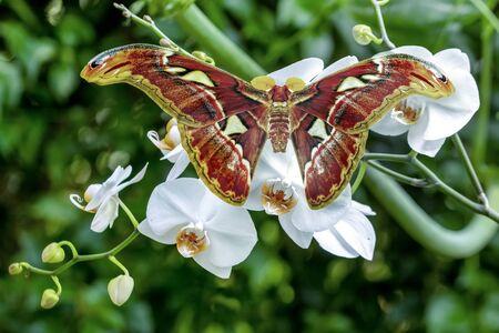 Closeup beautiful butterflies sitting on the flower.