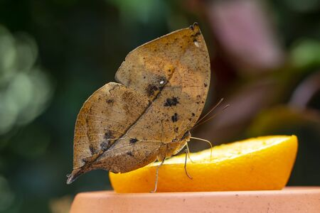 Closeup beautiful butterflies