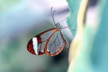 Closeup beautiful butterfly 스톡 콘텐츠