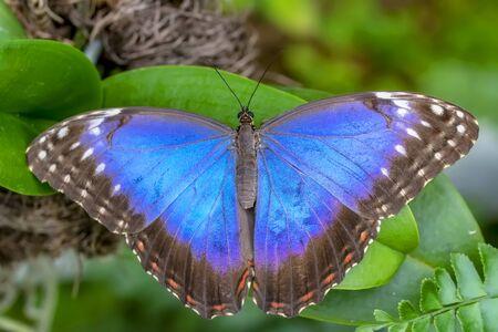 Hermosa mariposa sentada sobre una flor en un jardín de verano Foto de archivo