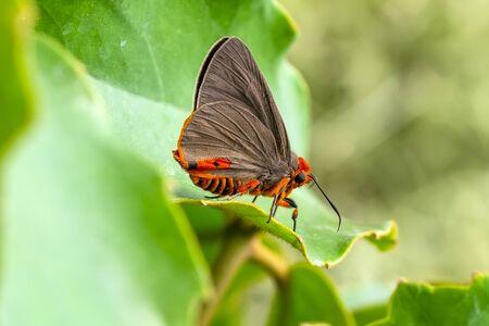 Beautiful butterfly sitting on a flower in a summer garden