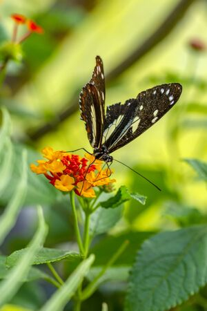 Closeup beautiful butterfly sitting on the flower. Imagens