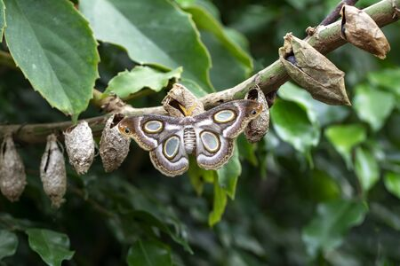 Butterflies farm. Sign In Sign In Different butterflies on a branch - Stock Image Imagens