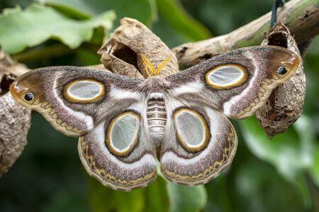 Beautiful Closeup butterfly on flower