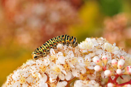 Macro shots, Beautiful nature scene. Close up beautiful caterpillar of butterfly