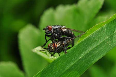 Macro shot of a fly in the garden Zdjęcie Seryjne