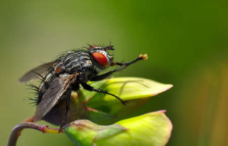 Macro shot of a fly in the garden