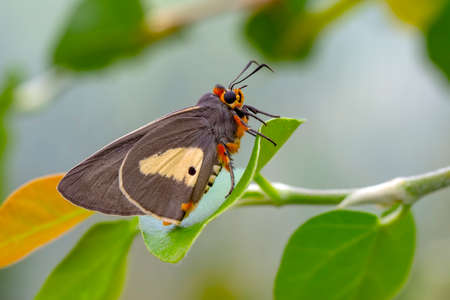 Macro Photography of Moth on Twig of Plant.