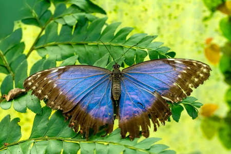 Macro shots, Beautiful nature scene. Closeup beautiful butterfly sitting on the flower in a summer garden. Stock fotó