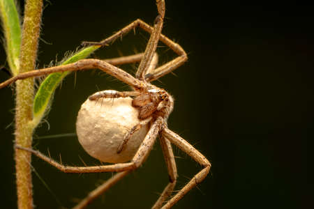 Beautiful spider on a spider web