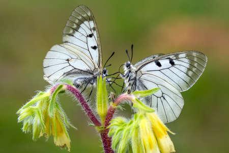 Macro shots, Beautiful nature scene. Closeup beautiful butterfly sitting on the flower in a summer garden. Imagens