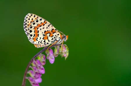 Macro shots, Beautiful nature scene. Closeup beautiful butterfly sitting on the flower in a summer garden.