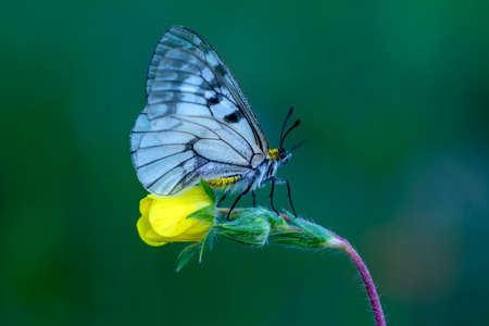 Macro shots, Beautiful nature scene. Closeup beautiful butterfly sitting on the flower in a summer garden. 版權商用圖片