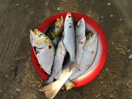 fished: Fished Fish