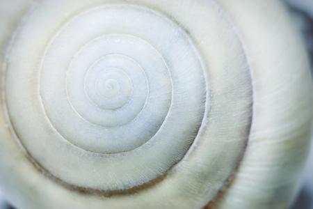 seashell: Spiral seashell macro closeup. Small depth of field