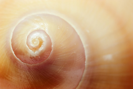 Brown spiral seashell macro closeup. Small depth of field