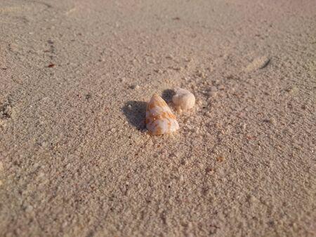 mollusca: shell on the beach Stock Photo