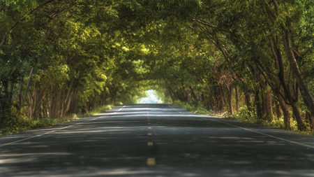 Tunnel of trees in thailand photo
