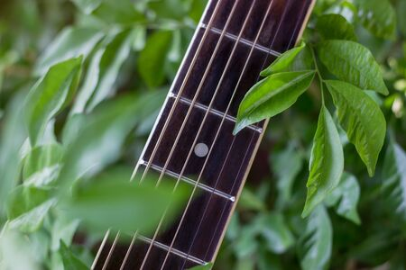 Neck of Guitar closeup with leaves background