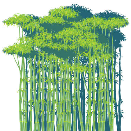 thickets: stylized vector illustration of a dense bamboo thickets