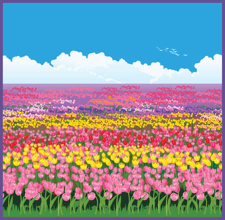 Seamless horizontally illustration of the vast fields of tulips 向量圖像