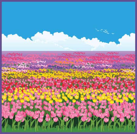 Seamless illustration horizontale des vastes champs de tulipes Banque d'images - 62264236