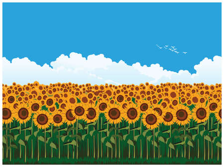 Seamless horizontal illustration of picturesque field of sunflowers