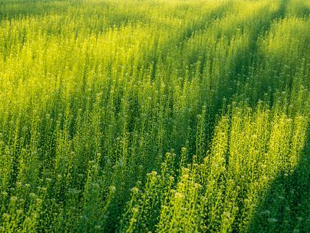 Dappled Sunlight on Overgrown Field