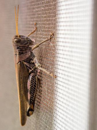 Grasshopper on Screen Door