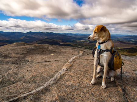 Dog with Backpack on Mountain
