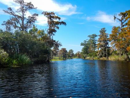 River Through a Bayou Under Blue Sky