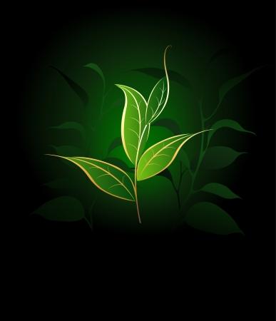fondo verde oscuro: art�sticamente pintados plantas de t� con el esquema del oro en un fondo verde oscuro.
