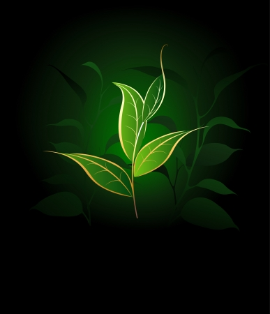 artistically painted tea plants with gold outline on a dark green background.
