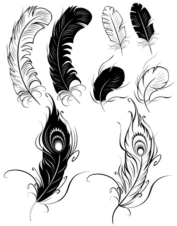 artistically painted feathers on a white background.  Vector