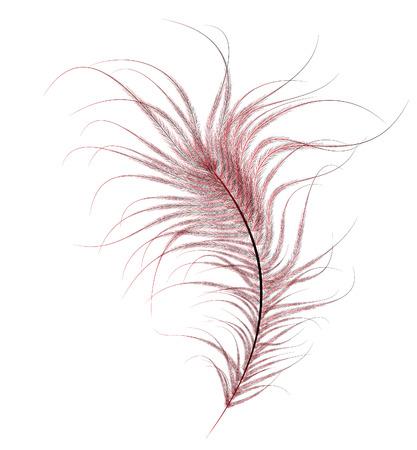 avestruz: bien pintada, rojo pluma de avestruz sobre un fondo blanco. Vectores