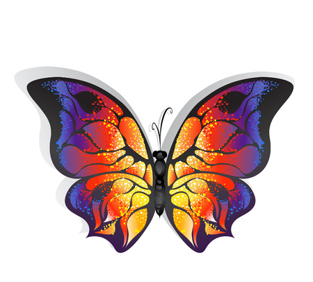 butterfly isolated: Butterfly with bright colorful wings on a white background  Illustration